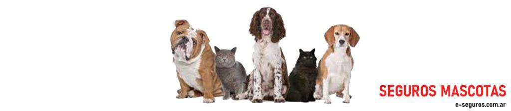 ¿Qué cubre un seguro para mascotas?